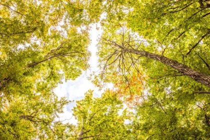 Παγκόσμια ημέρα περιβάλλοντος – Η ώρα της Φύσης