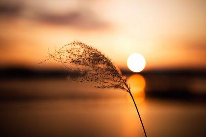 Ο ήλιος «εξουδετερώνει» τον κορoνοϊό σε μισή ώρα
