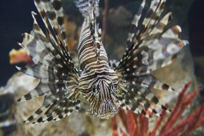 Ανθρώπινο μάτι και ψάρι-ζέβρα-Ποιά η ταύτιση;