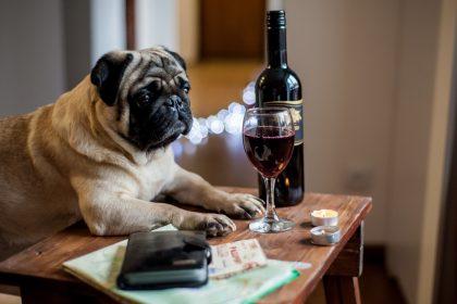 σχέση σκύλοτ και διαβήτη σκύλος σκεπτικός με κρασί