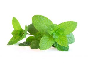 δυσκοιλιότητα βότανα τροφές φύλλα πράσινης μέντας