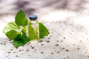 βότανα τροφές ενέργεια φύλλα μέντας