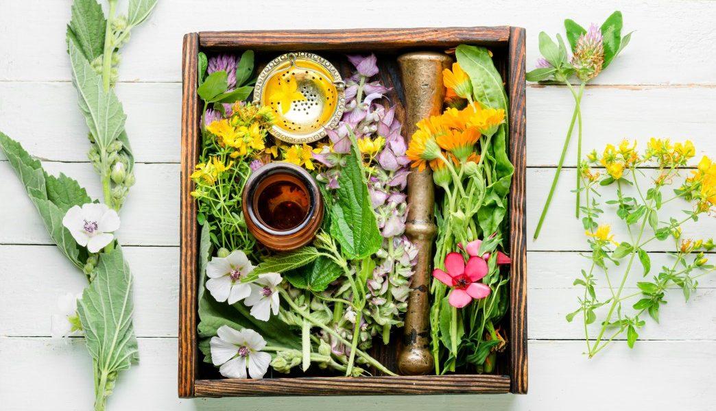 βότανα για την αύξηση τεστοστερόνης
