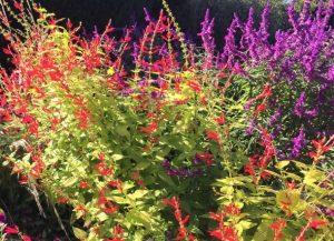 βότανα για χρόνια αποφρακτική πνευμονοπάθεια