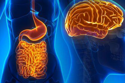 εγκέφαλος έντερο σύνδεση εγκεφάλου και εντέρου ψυχολογία