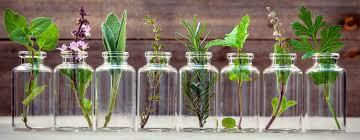 Διάφορα φαρμακευτικά βότανα