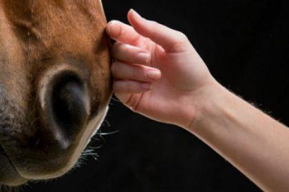 Π.Ο.Υ.: Σχηματίστηκε επιτροπή ειδικών για την αποτροπή μετάδοσης ασθενειών από τα ζώα