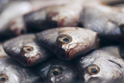 μεσογειακή διατροφή εγκέφαλος φρέσκα ψάρια