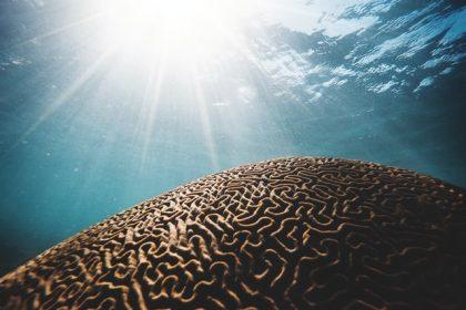 ελεύθερη βούληση νευροεπιστήμη νευρολογία εγκέφαλος μέσα στην θάλασσα