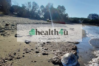 Θαλάσσια χελών της Σχοινούσας νεκρή