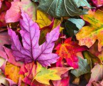 φρούτα του φθινοπώρου φύλλα με διάφορα χρώματα