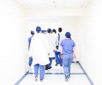 μεταμόσχευση νεφρού από χοίρο σε άνθρωπο